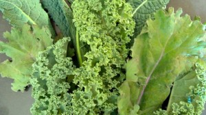 Freshly harvested kale